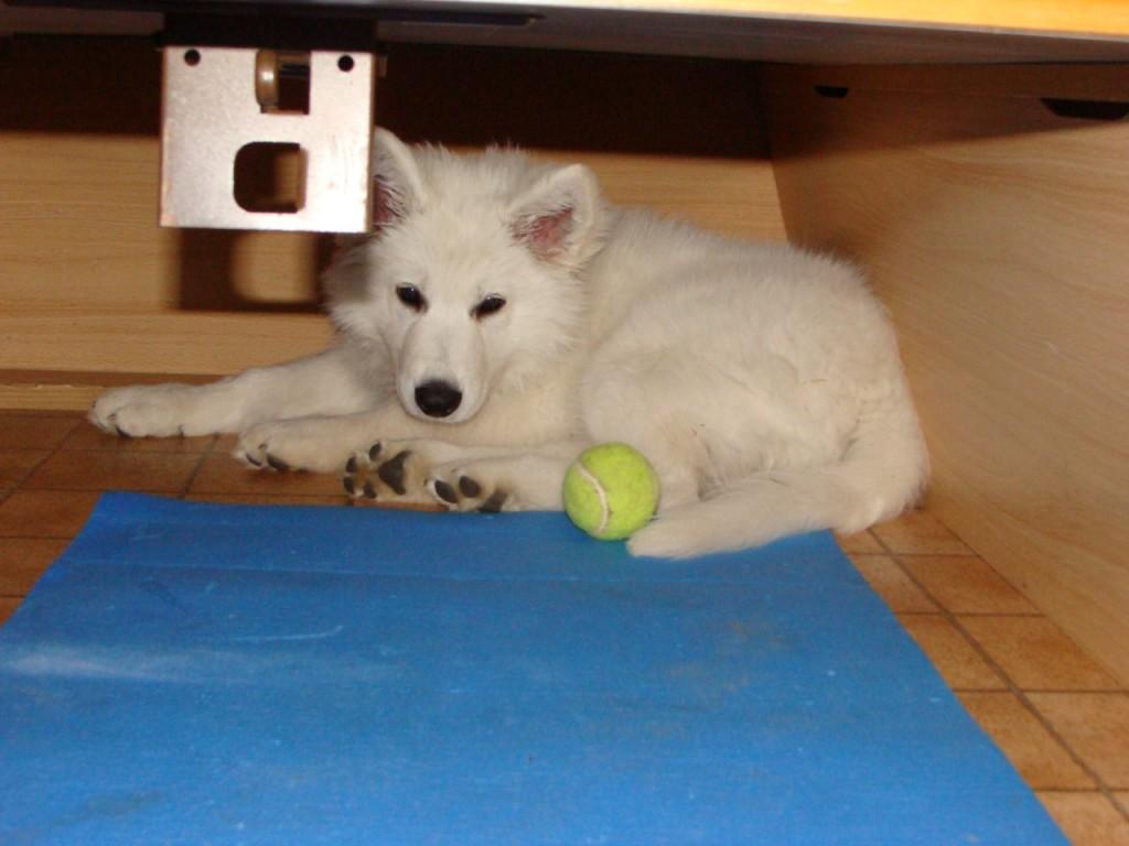Finnja unter dem Bett, einfach kaputt von der großen, interessanten Welt.