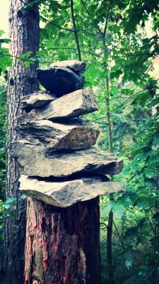 Wald-in-Hohenstein-Ernstthal (2)