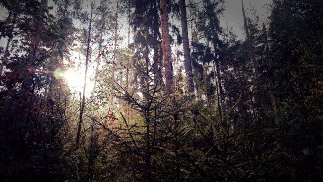 Wald-in-Hohenstein-Ernstthal (3)