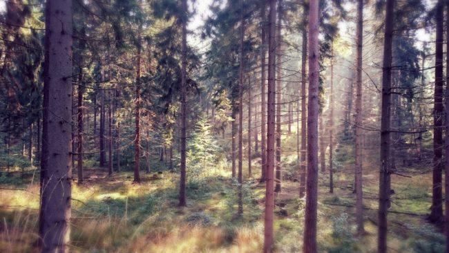 Wald-in-Hohenstein-Ernstthal (5)